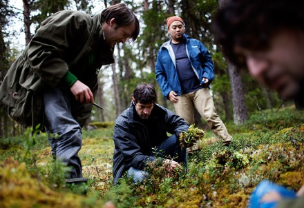 Cook it raw in Lapland. From left: Chefs René Redzepi, Daniel Patterson and David Chang forage for ingredients in the woods near the town of Levi, Finland. Photo: Erik Refner